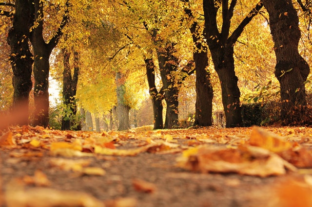 A Prayer for the Fall Feasts