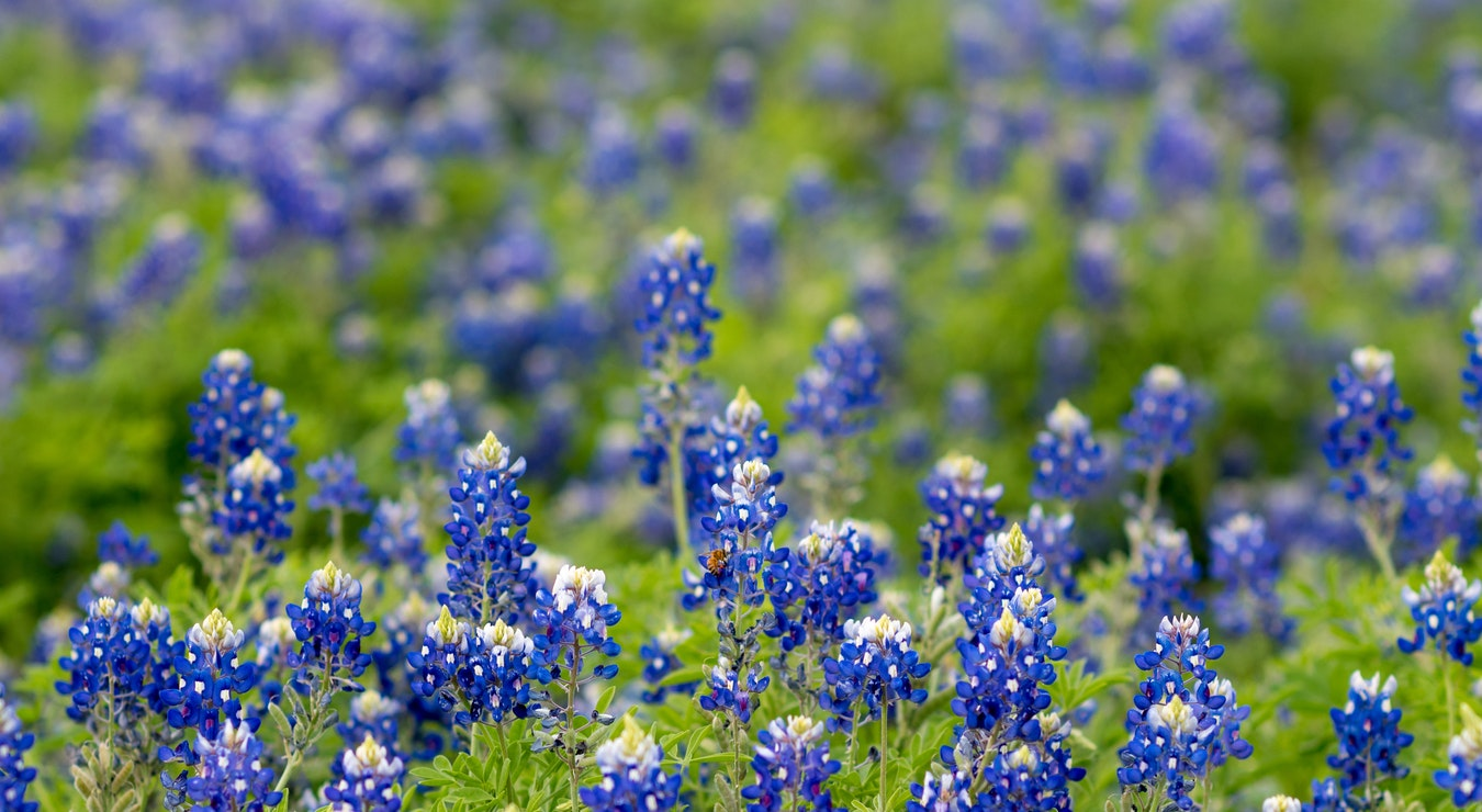 A Prayer for the State of Texas